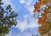 осенние листья, очень мелкий фокус — Стоковое фото