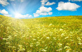 Green field with blooming flowers and blue sky — Stock Photo
