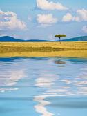 反射と典型的なアフリカの風景 — ストック写真