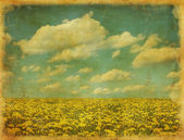 Vintage image of dandelion field — Stock Photo
