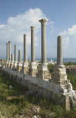 Ancient columns of Tyre, Lebanon — Stock Photo