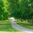 Green alley — Stock Photo #9605536