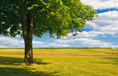 Tree in a field — Stock Photo