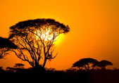Africký západ slunce v savannah — Stock fotografie