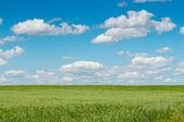 Zielone pole z kwitnących kwiatów i błękitne niebo — Zdjęcie stockowe