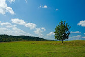 Lonely tree in a green field — Stock Photo