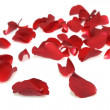 Stock Photo: Rose petals on white background