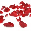 Rose petals on white background — Stock Photo #9652627