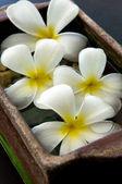 Flowers at spa salon — Stock Photo