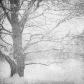 Grunge image of winter landscape — Stock Photo