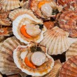 Fresh scallops at fish market - Foto de Stock