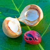 Close up image of nutmeg — Stock Photo
