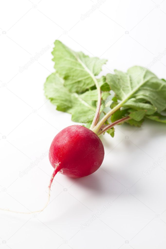 Fresh radish was placed on a white background — Stock Photo #9847325