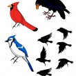 Stock Vector: Birds Bluebird Raven Cardinal