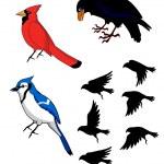 Birds Bluebird Raven Cardinal — Stock Vector #10460421