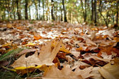 Outdoor autumn - the leaves on the ground — Stock Photo
