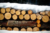 Wooden logs in the forest — Stock Photo