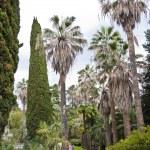 The park arboretum — Stock Photo #10033728