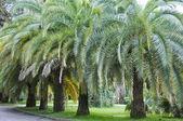 Park botanik bahçesi — Stok fotoğraf