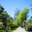The park arboretum — Stock Photo