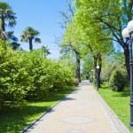The park arboretum — Stock Photo