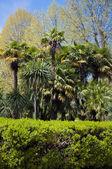 公園の樹木園 — ストック写真