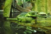 Crocodiles with turtle in ZOO, Czech Republic — Stock Photo