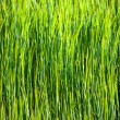 Abstract green grass background - Stock Photo