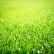 Close up of green grass. — Stock Photo