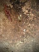 Grunge texture of old floor — Stock Photo
