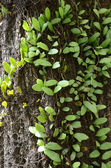 Close-Up Green Plant — Stock Photo