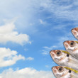 Fresh fish on blue sky — Foto de Stock