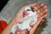 Newborn puppy — Stock Photo
