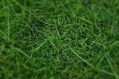 Grass Background closeup — Stock Photo