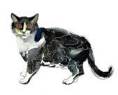 черный и белый кот с фулл-хаус внутри концепции — Стоковое фото