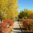 Bright colors of the autumn park — Stock Photo #9424438
