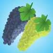 Stock Vector: Grapes