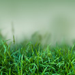 Green grass in the nature - Stock Photo