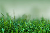 Green grass in the nature — Stock Photo