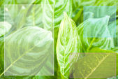 Green leaf with blank space — Stock Photo
