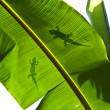 Lizard silhouette on green leaf — Stock Photo
