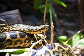Snake wrapped on a limb — Stock Photo