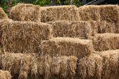 Straw in farm — Stock Photo