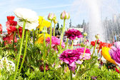 Beautiful flowers and a fountain in a park — Stock Photo