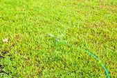 Sprinkler watering the green grass — Stock Photo
