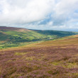 Heathlands and a Valley in Wicklow Mountains — Stock Photo
