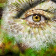 Face with brown eye and painted dandelion — Stock Photo
