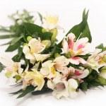 Astromeria on white (flowers) — Zdjęcie stockowe #9710966