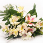Astromeria on white (flowers) — Zdjęcie stockowe