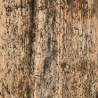 Grained pine timber wall — Stock Photo
